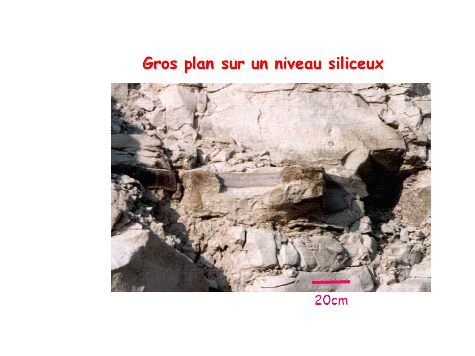 Gros plan sur un niveau siliceux