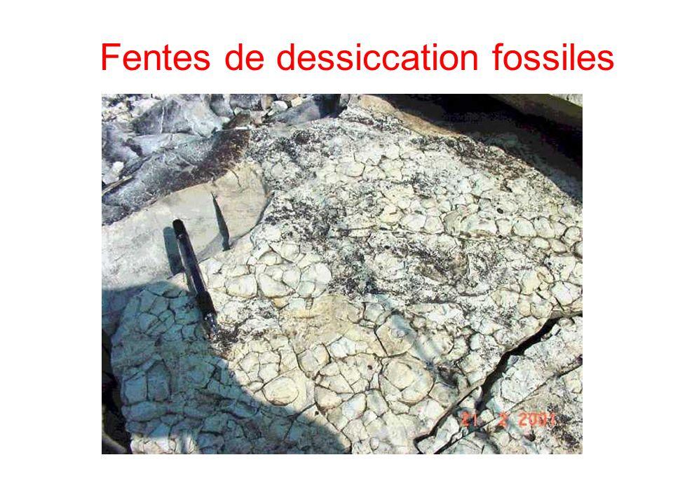 Fentes de dessiccation fossiles