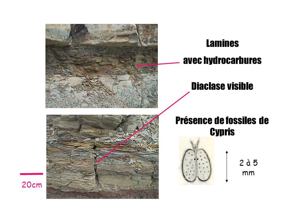 Présence de fossiles de Cypris