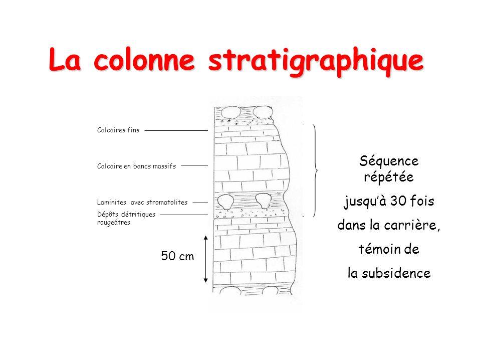 La colonne stratigraphique