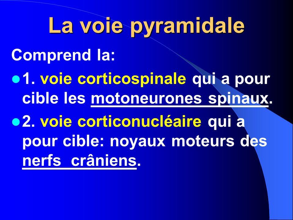 La voie pyramidale Comprend la: