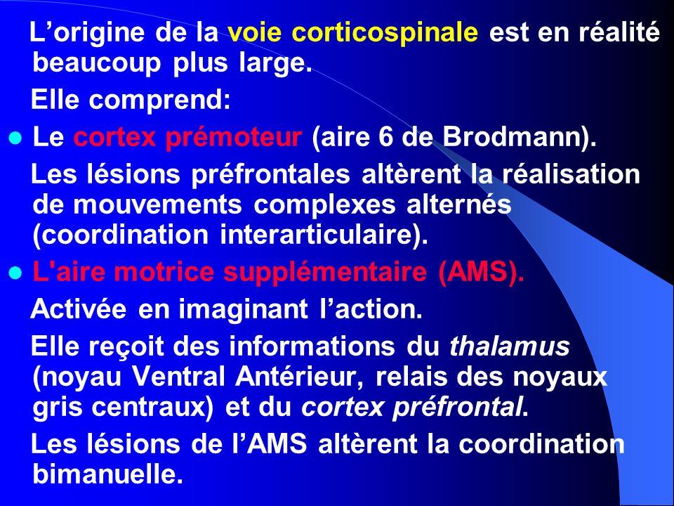 Le cortex prémoteur (aire 6 de Brodmann).