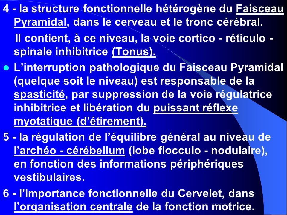 4 - la structure fonctionnelle hétérogène du Faisceau Pyramidal, dans le cerveau et le tronc cérébral.