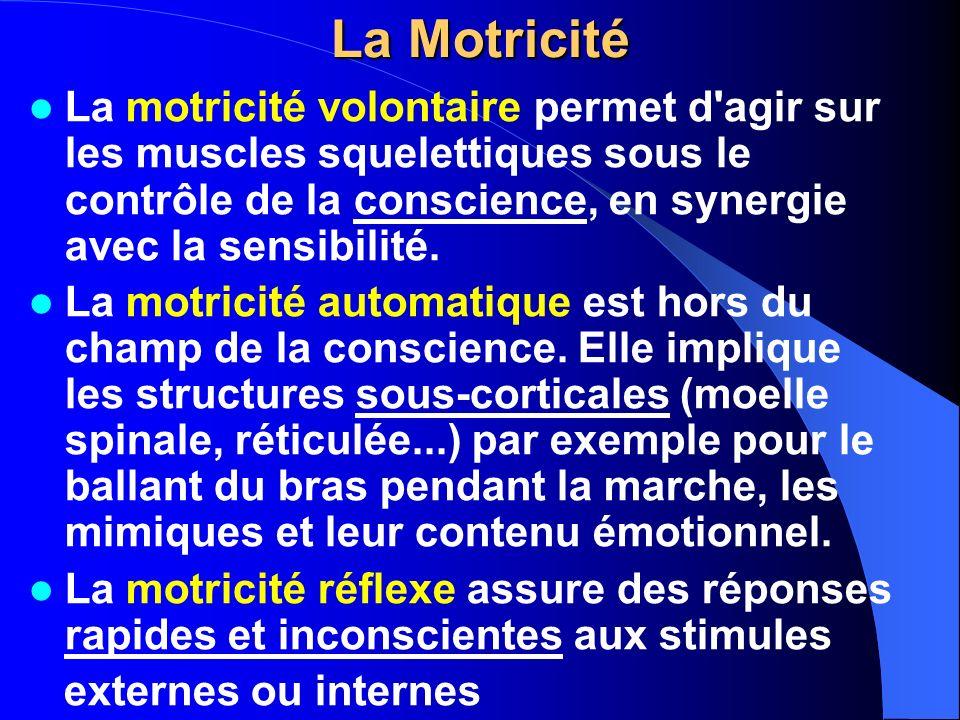 La Motricité