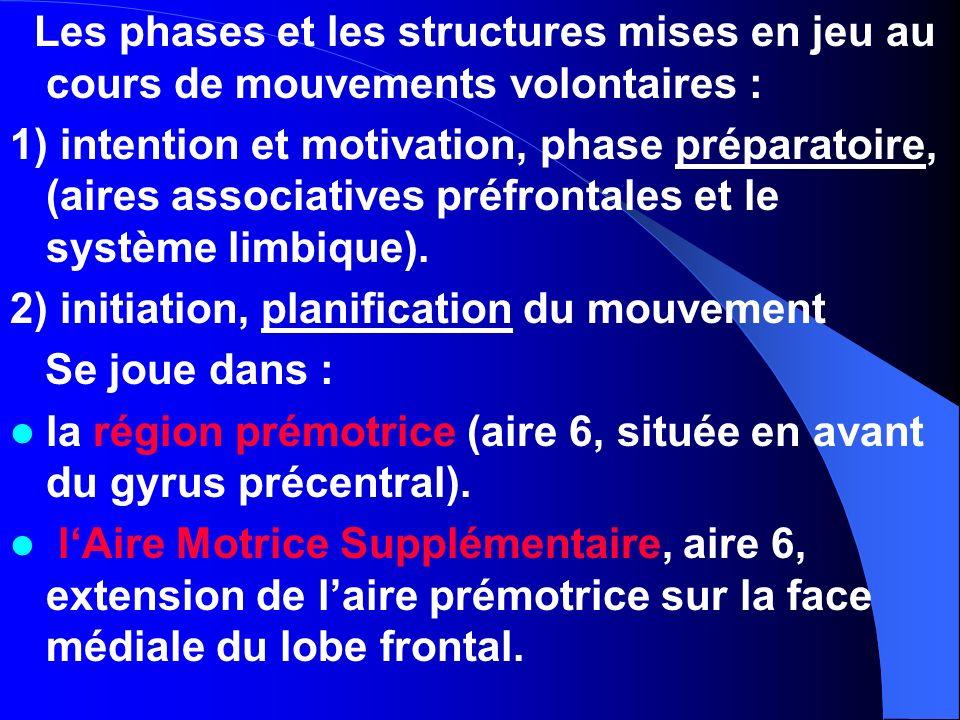 Les phases et les structures mises en jeu au cours de mouvements volontaires :