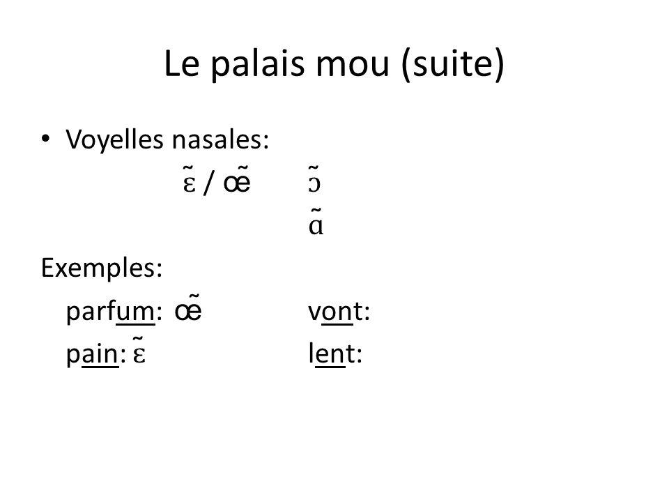 Le palais mou (suite) Voyelles nasales: ɛ̃ / œ̃ ɔ̃ ɑ̃ Exemples: