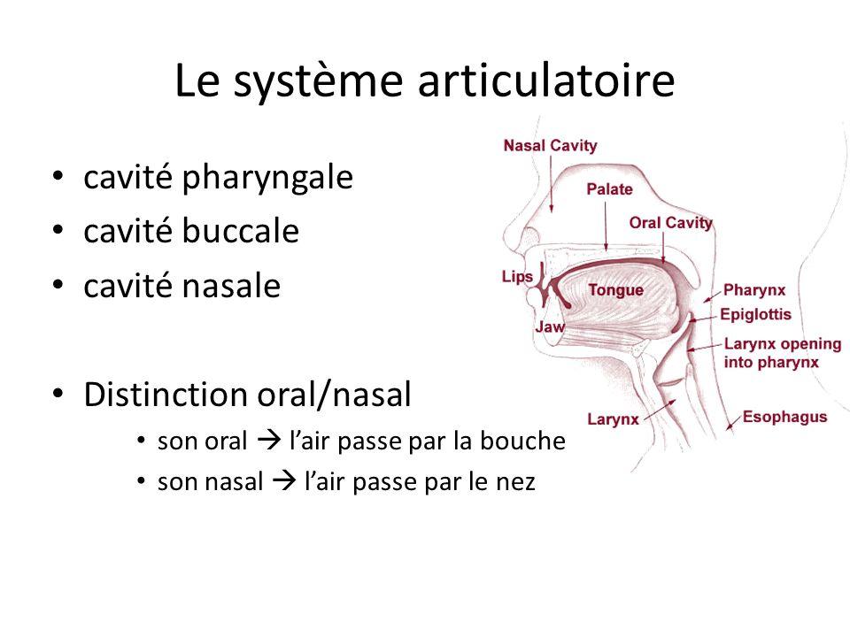 Le système articulatoire