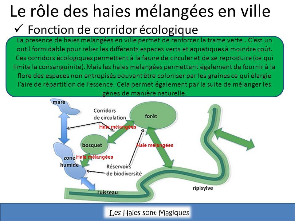 Le rôle des haies mélangées en ville