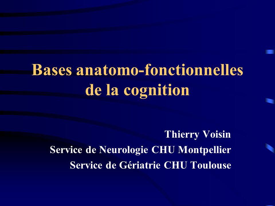Bases anatomo-fonctionnelles de la cognition