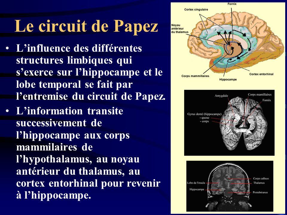 Le circuit de Papez