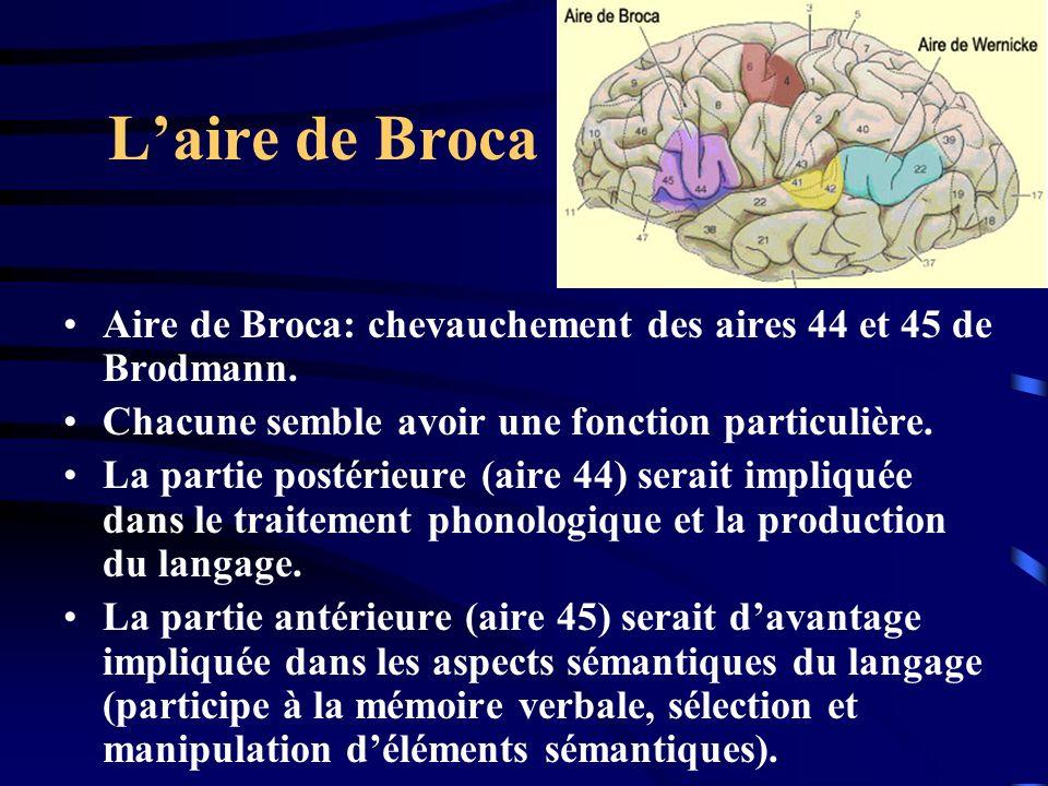 L'aire de Broca Aire de Broca: chevauchement des aires 44 et 45 de Brodmann. Chacune semble avoir une fonction particulière.