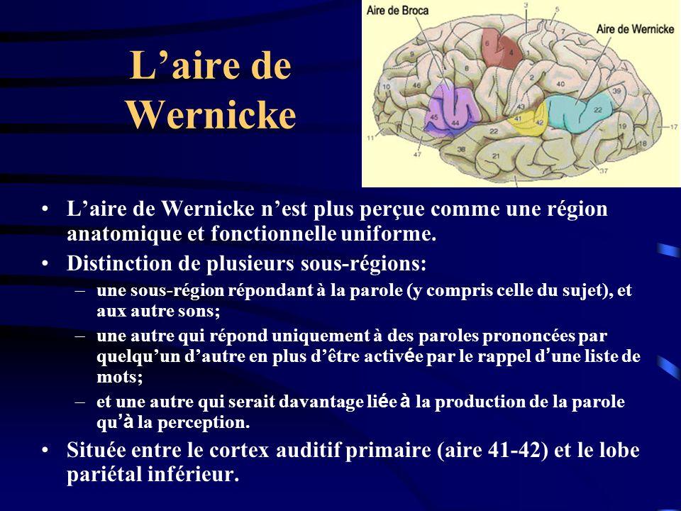 L'aire de Wernicke L'aire de Wernicke n'est plus perçue comme une région anatomique et fonctionnelle uniforme.