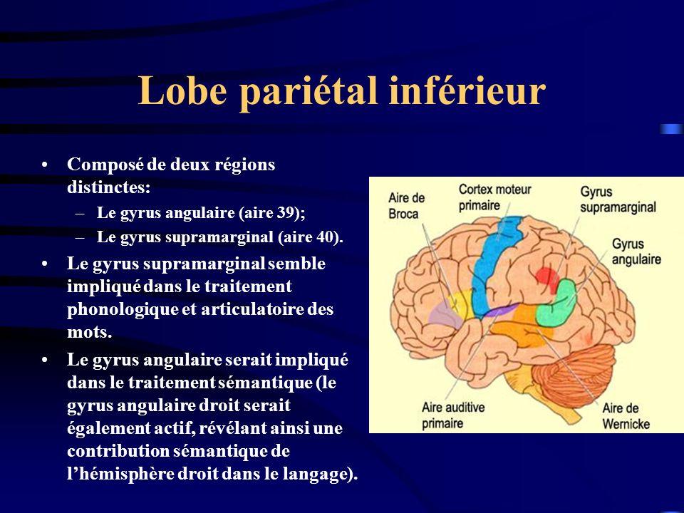 Lobe pariétal inférieur