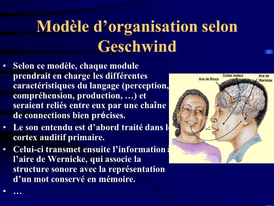 Modèle d'organisation selon Geschwind