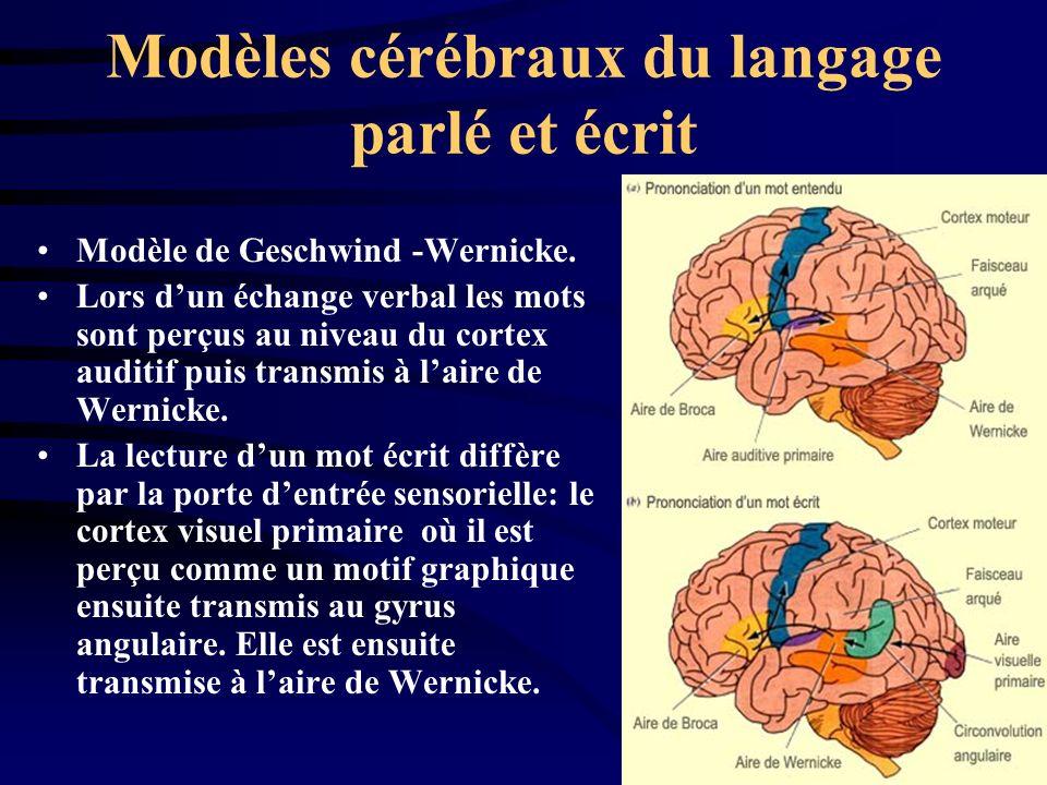 Modèles cérébraux du langage parlé et écrit