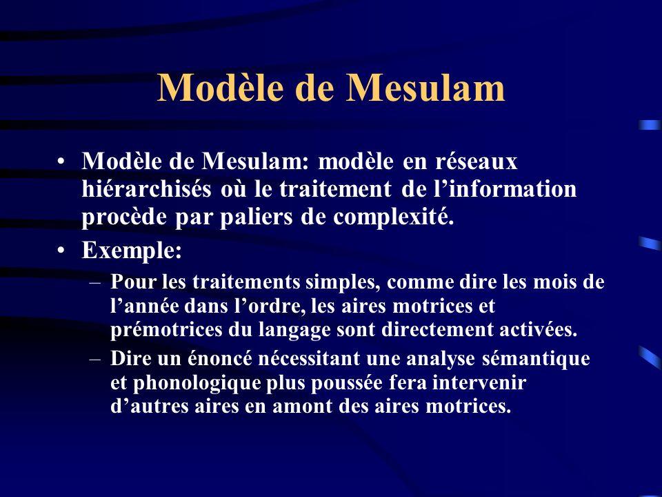 Modèle de Mesulam Modèle de Mesulam: modèle en réseaux hiérarchisés où le traitement de l'information procède par paliers de complexité.
