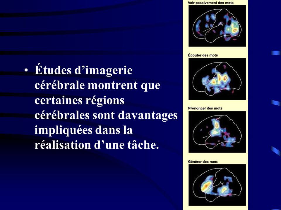 Études d'imagerie cérébrale montrent que certaines régions cérébrales sont davantages impliquées dans la réalisation d'une tâche.