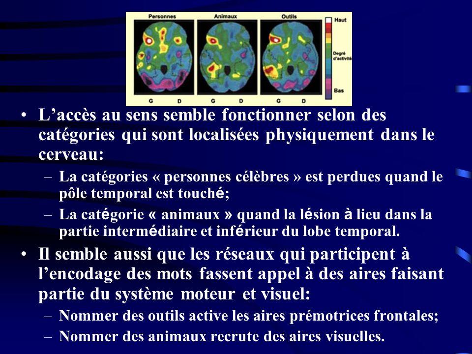 L'accès au sens semble fonctionner selon des catégories qui sont localisées physiquement dans le cerveau: