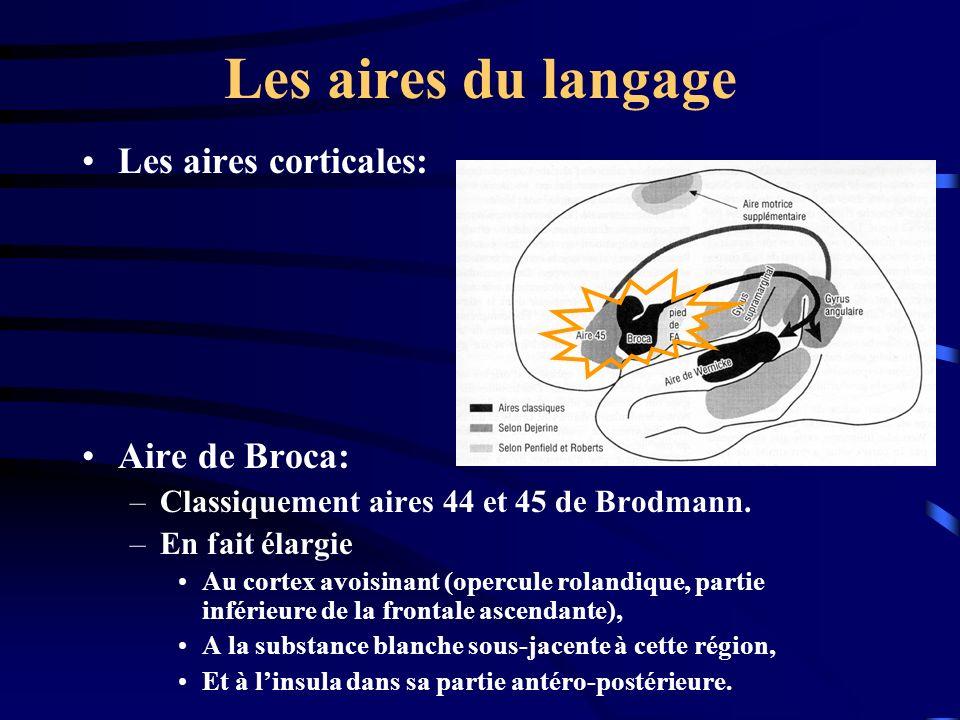 Les aires du langage Les aires corticales: Aire de Broca: