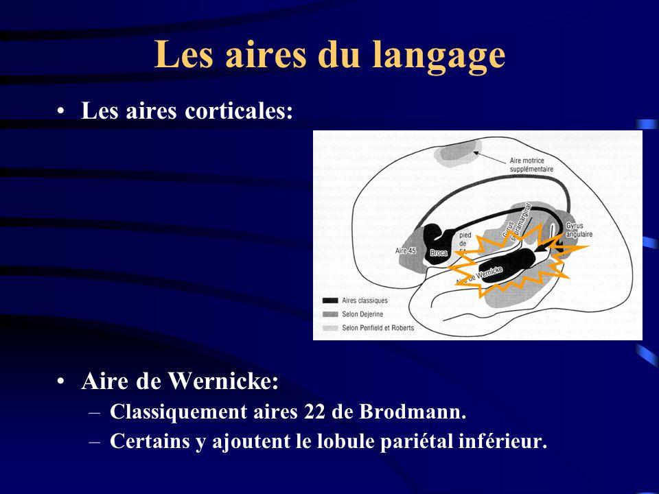 Les aires du langage Les aires corticales: Aire de Wernicke: