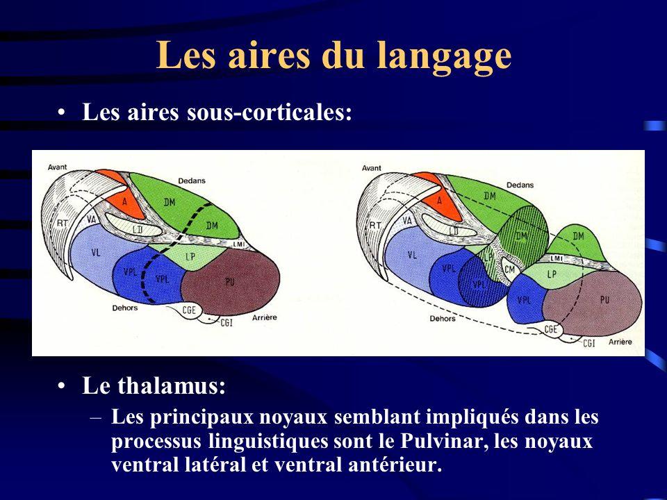 Les aires du langage Les aires sous-corticales: Le thalamus: