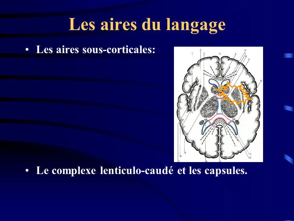 Les aires du langage Les aires sous-corticales: