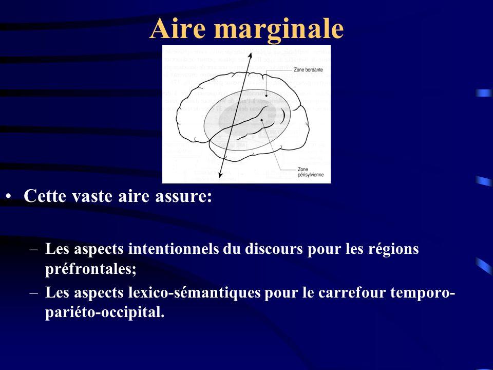 Aire marginale Cette vaste aire assure: