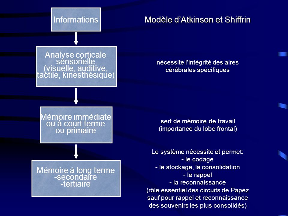 Modèle d'Atkinson et Shiffrin