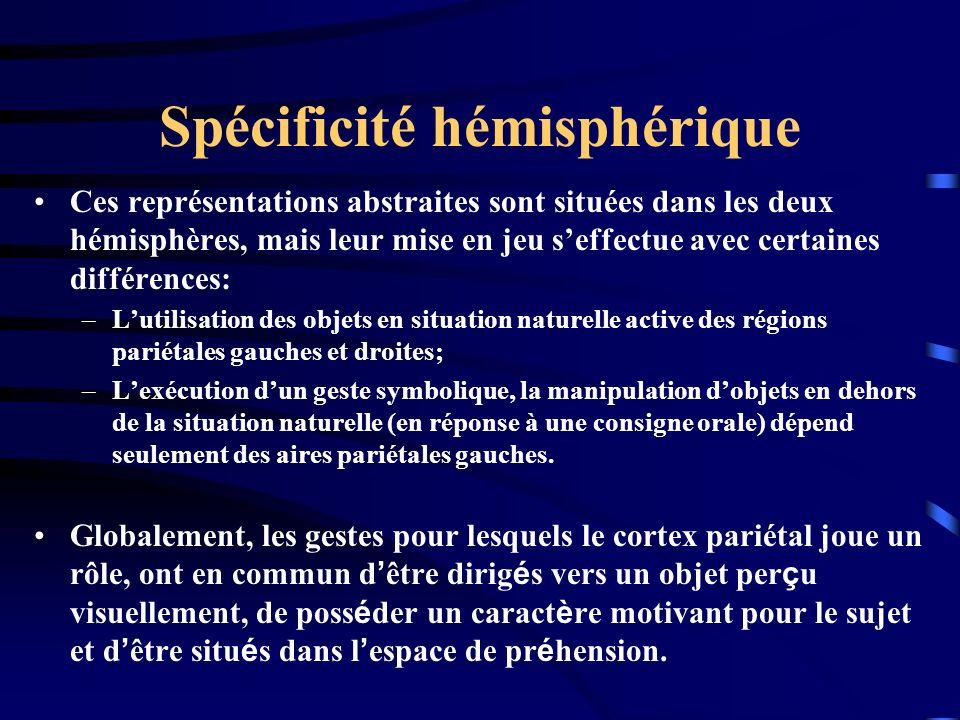 Spécificité hémisphérique