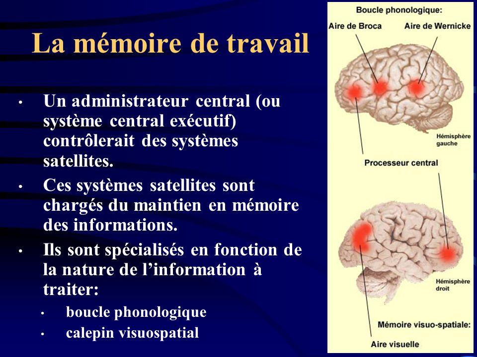 La mémoire de travail Un administrateur central (ou système central exécutif) contrôlerait des systèmes satellites.