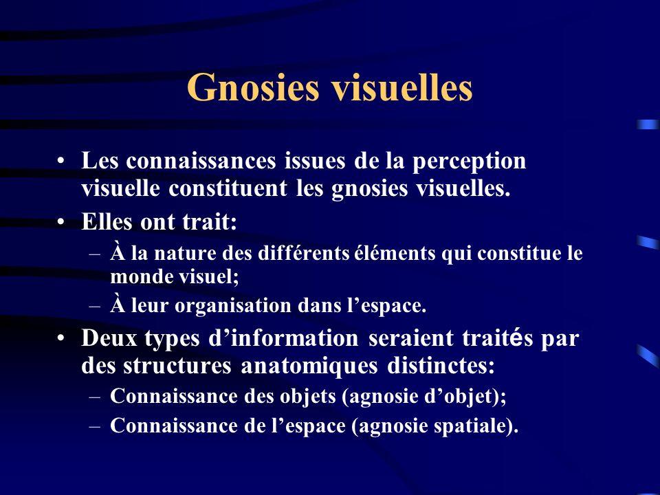 Gnosies visuelles Les connaissances issues de la perception visuelle constituent les gnosies visuelles.