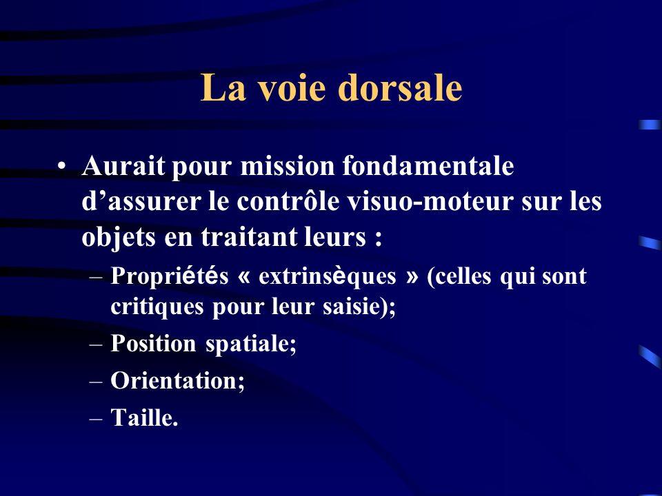 La voie dorsale Aurait pour mission fondamentale d'assurer le contrôle visuo-moteur sur les objets en traitant leurs :