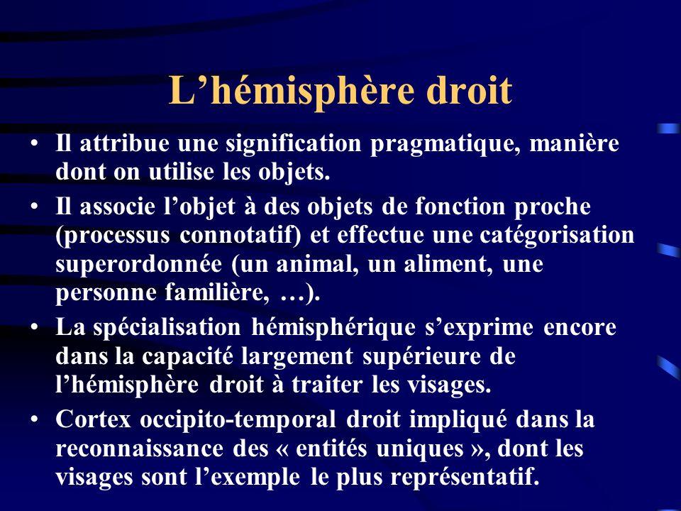 L'hémisphère droit Il attribue une signification pragmatique, manière dont on utilise les objets.