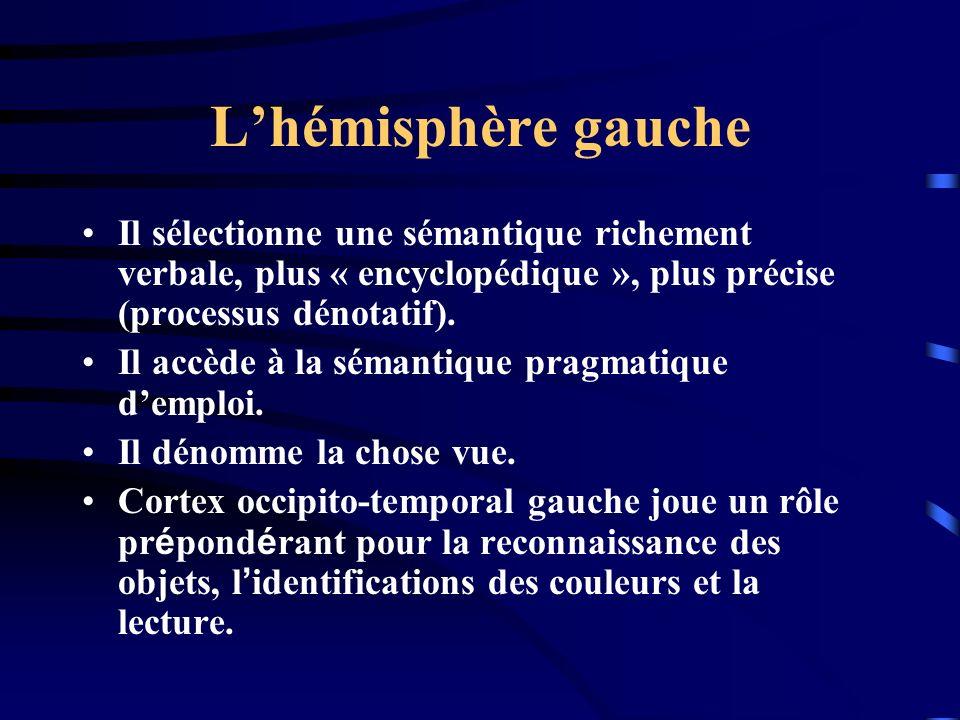 L'hémisphère gauche Il sélectionne une sémantique richement verbale, plus « encyclopédique », plus précise (processus dénotatif).