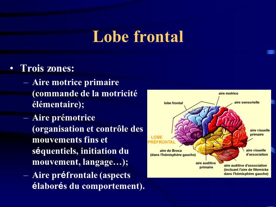 Lobe frontal Trois zones:
