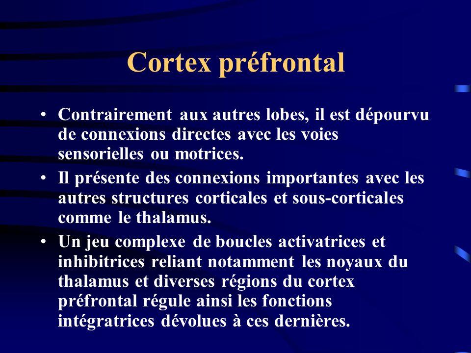 Cortex préfrontal Contrairement aux autres lobes, il est dépourvu de connexions directes avec les voies sensorielles ou motrices.