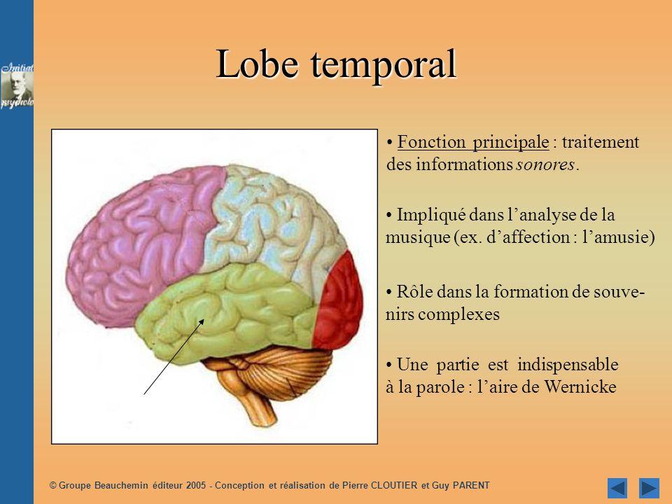 Lobe temporal Fonction principale : traitement des informations sonores. Impliqué dans l'analyse de la musique (ex. d'affection : l'amusie)