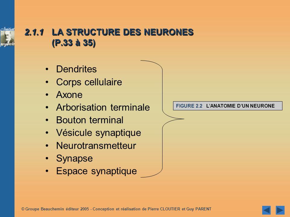 2.1.1 LA STRUCTURE DES NEURONES (P.33 à 35)