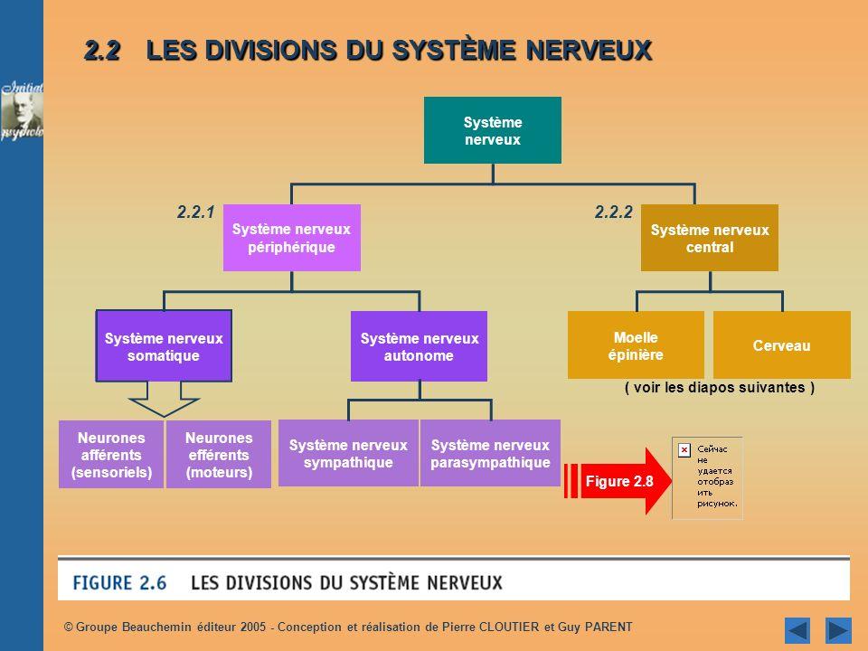 2.2 LES DIVISIONS DU SYSTÈME NERVEUX