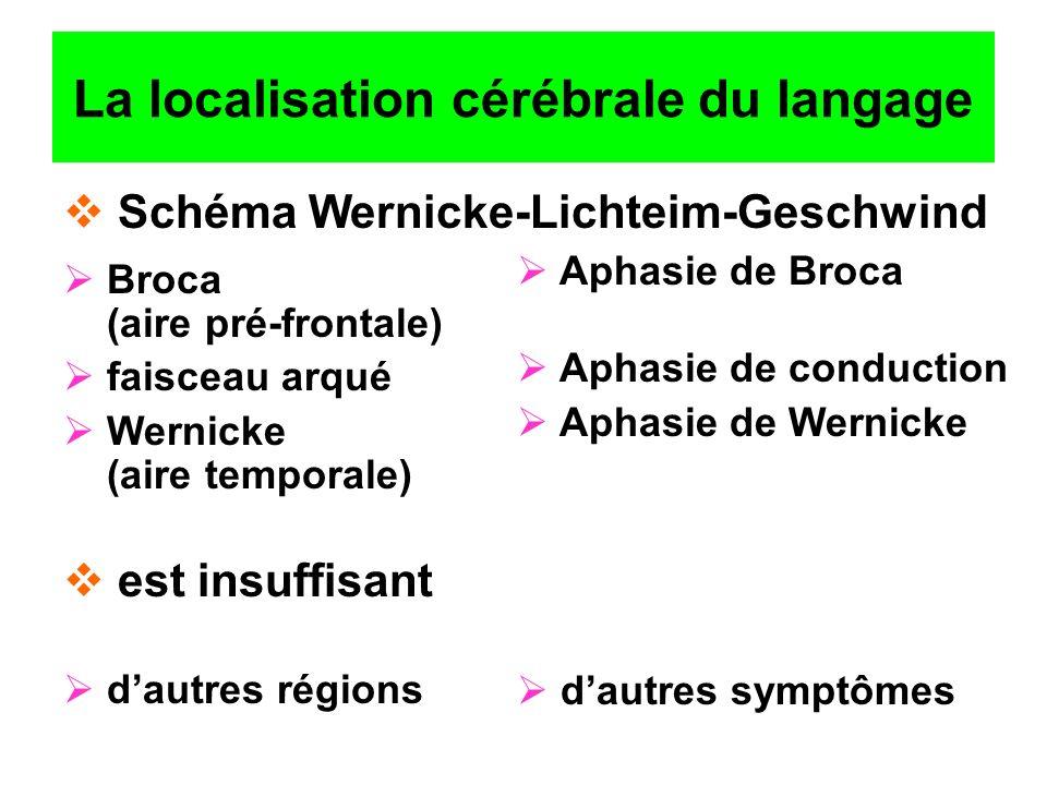 La localisation cérébrale du langage