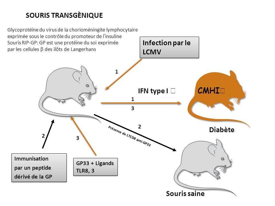 SOURIS TRANSGÈNIQUE Infection par le LCMV IFN type I  CMHI Diabète
