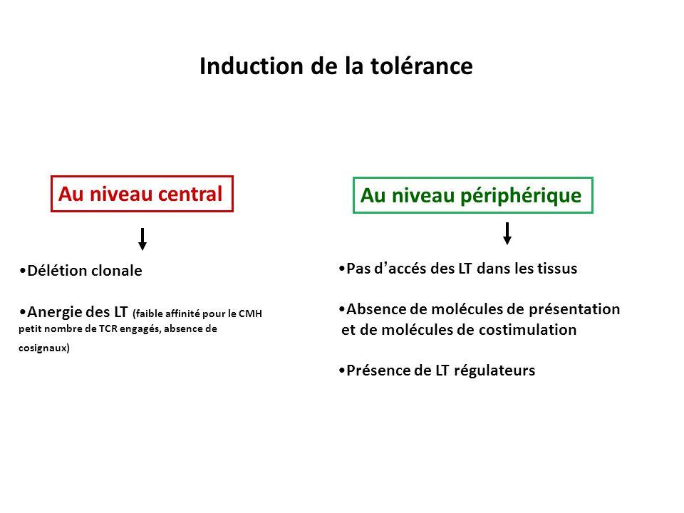 Induction de la tolérance