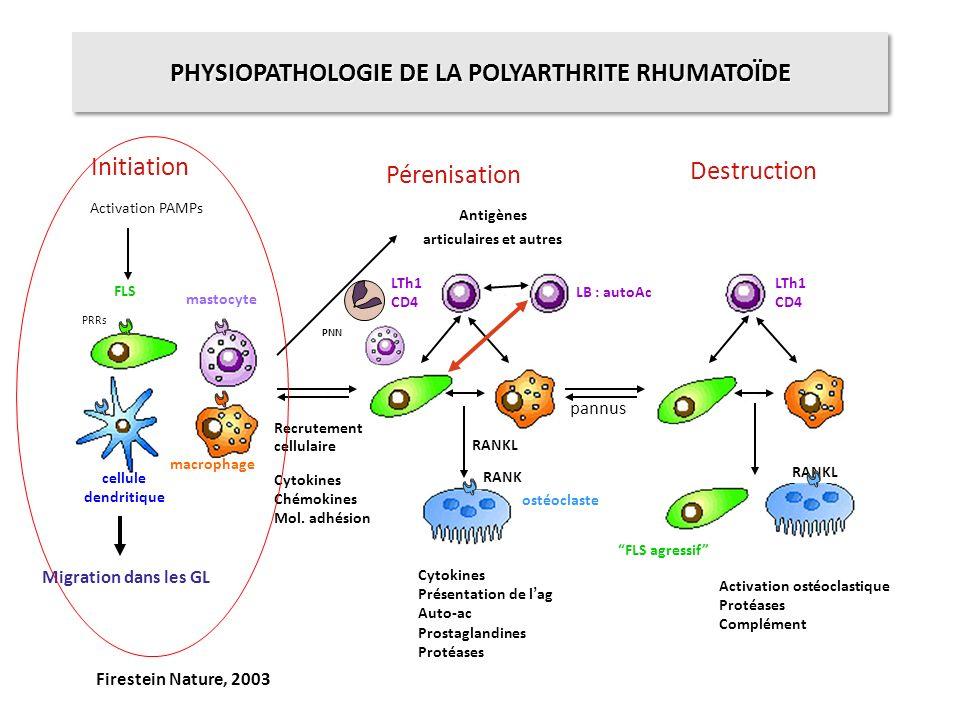 PHYSIOPATHOLOGIE DE LA POLYARTHRITE RHUMATOÏDE articulaires et autres