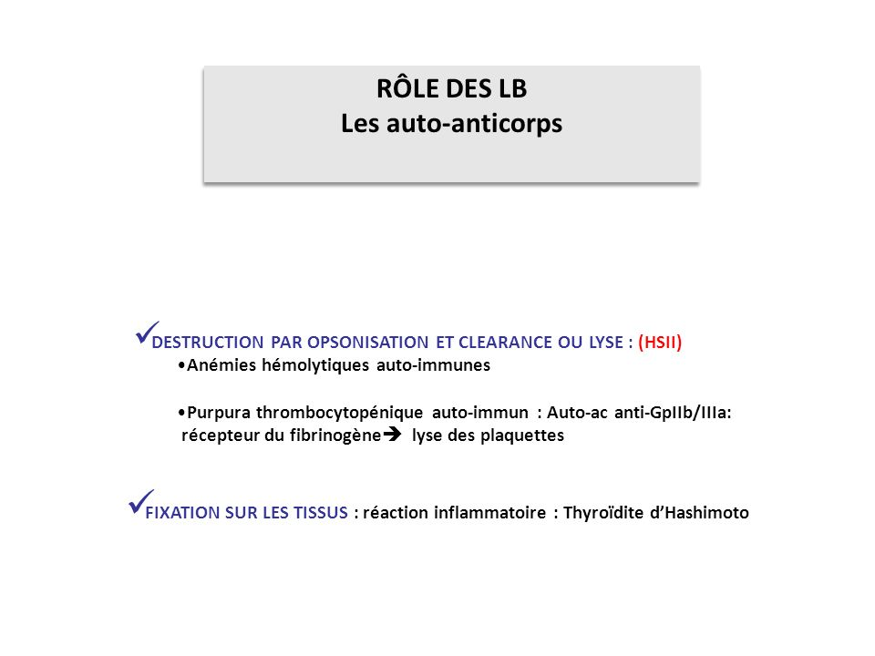 RÔLE DES LB Les auto-anticorps