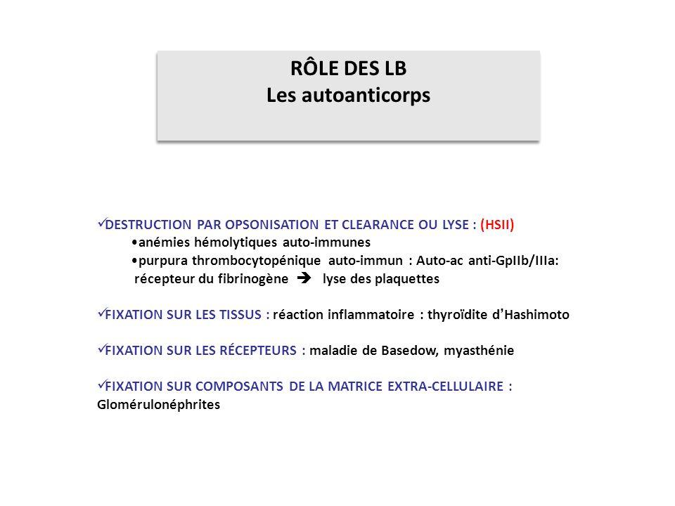 RÔLE DES LB Les autoanticorps
