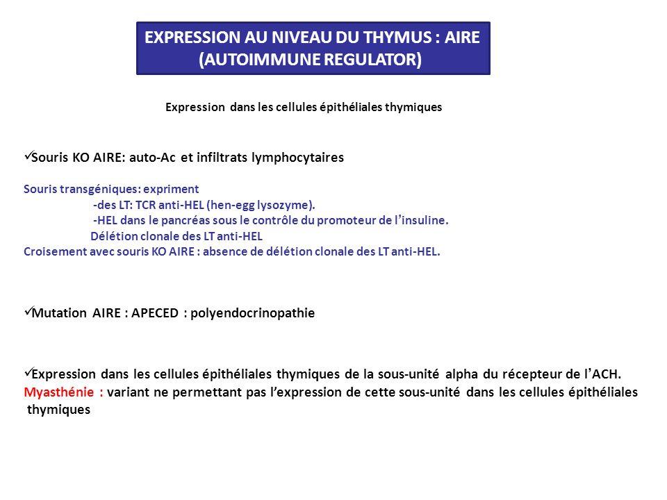 EXPRESSION AU NIVEAU DU THYMUS : AIRE (AUTOIMMUNE REGULATOR)