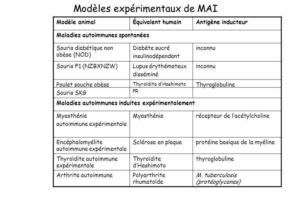 Modèles expérimentaux de MAI