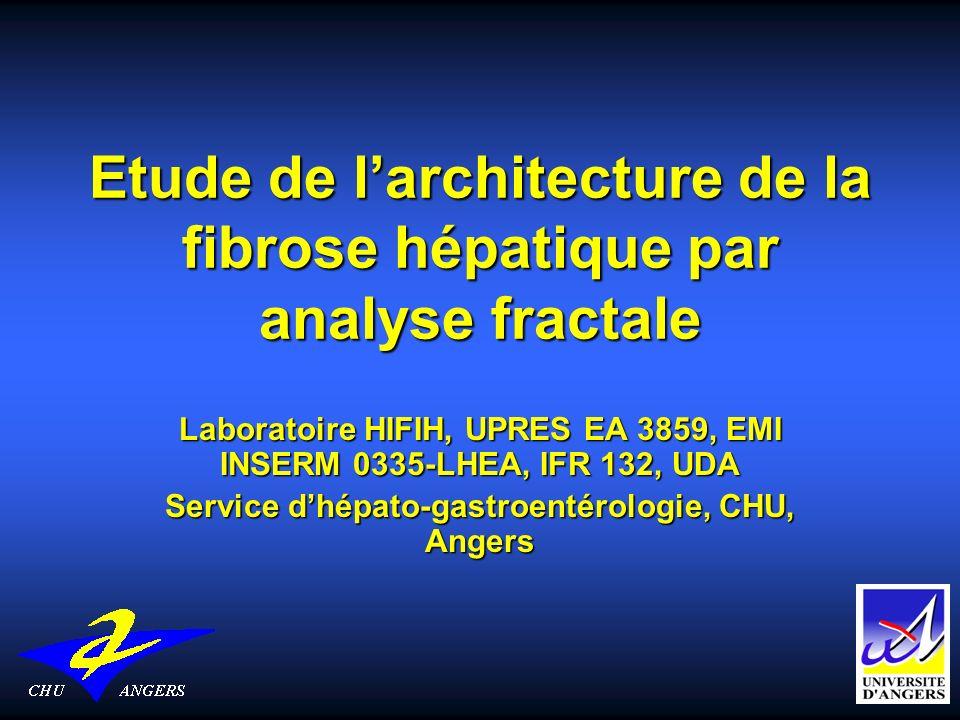 Etude de l'architecture de la fibrose hépatique par analyse fractale