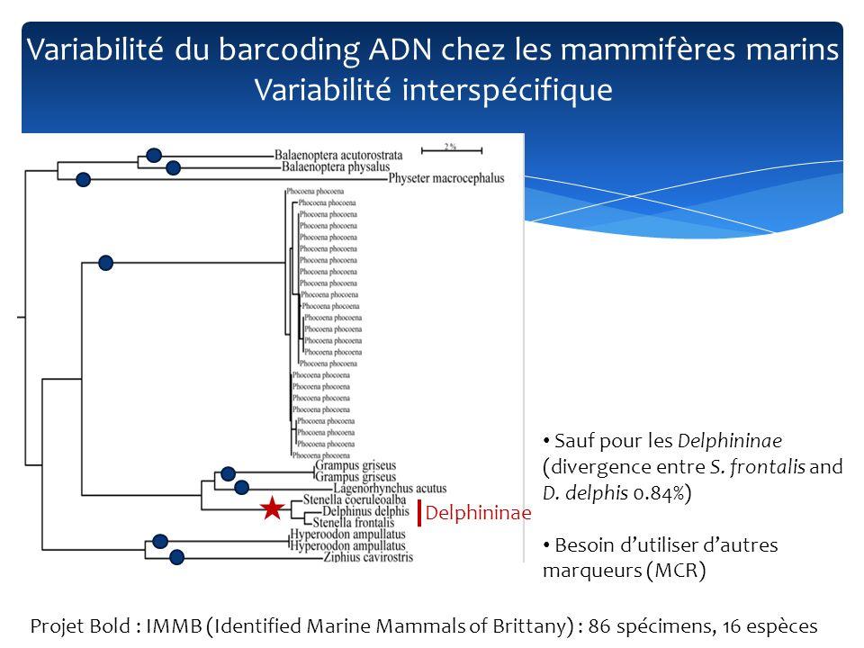 Variabilité du barcoding ADN chez les mammifères marins Variabilité interspécifique