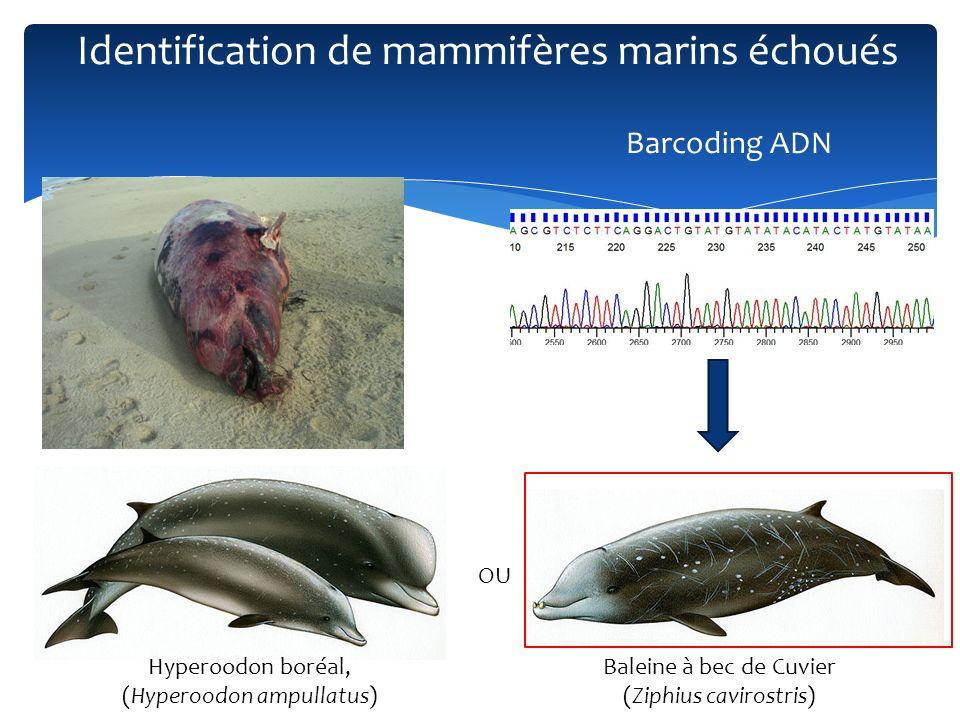 Identification de mammifères marins échoués